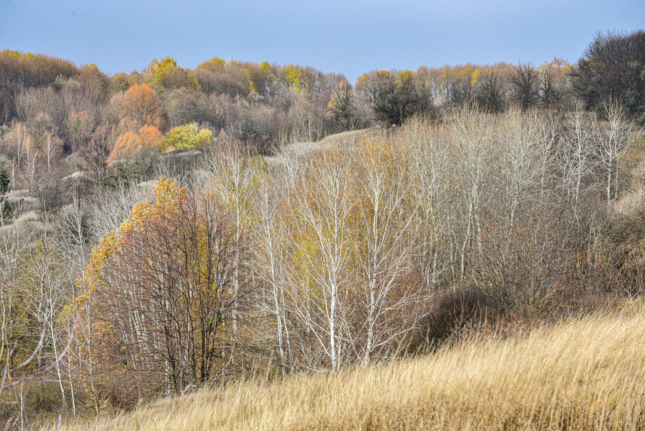 autumn landscape ukraine 0015