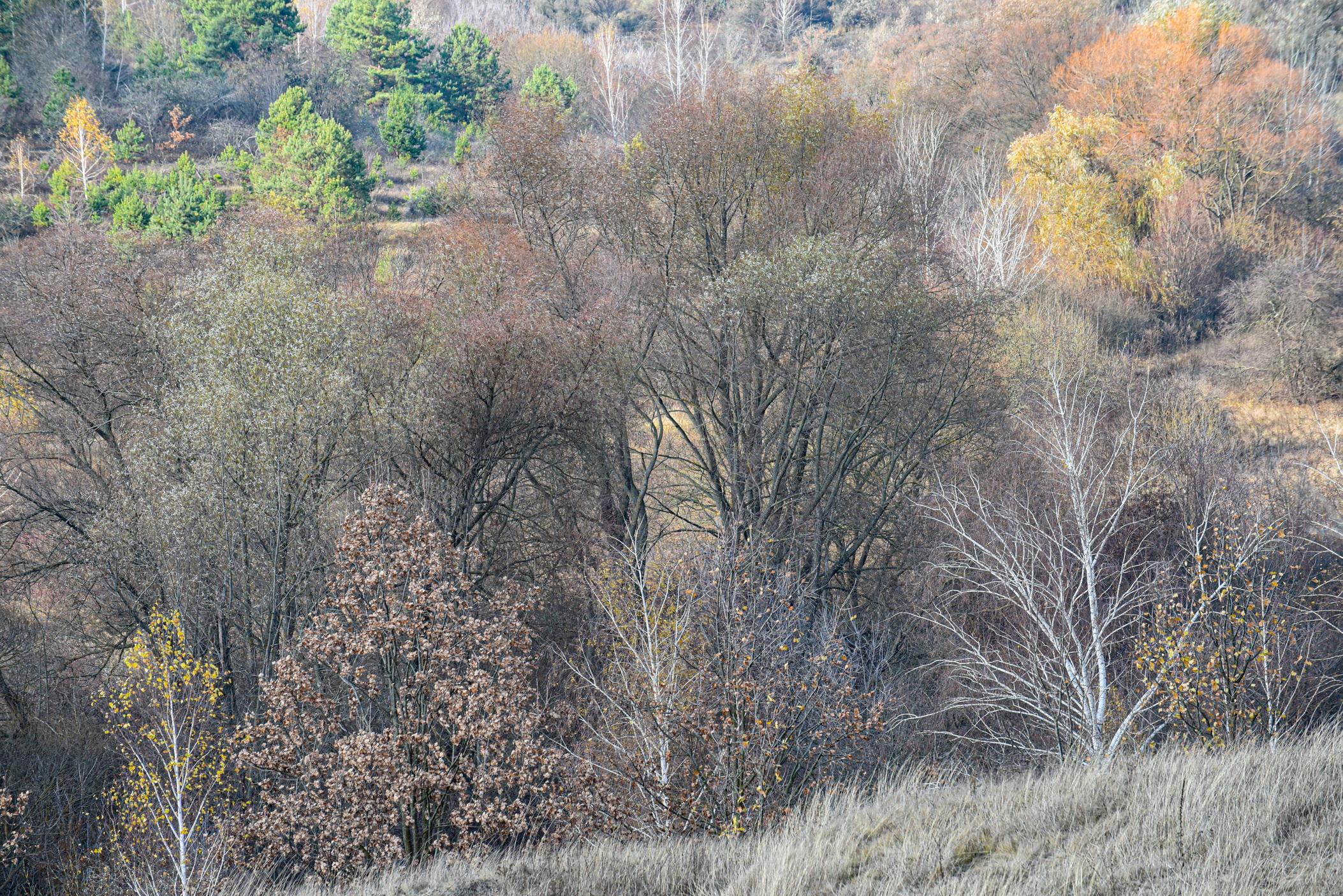 autumn landscape ukraine 0016
