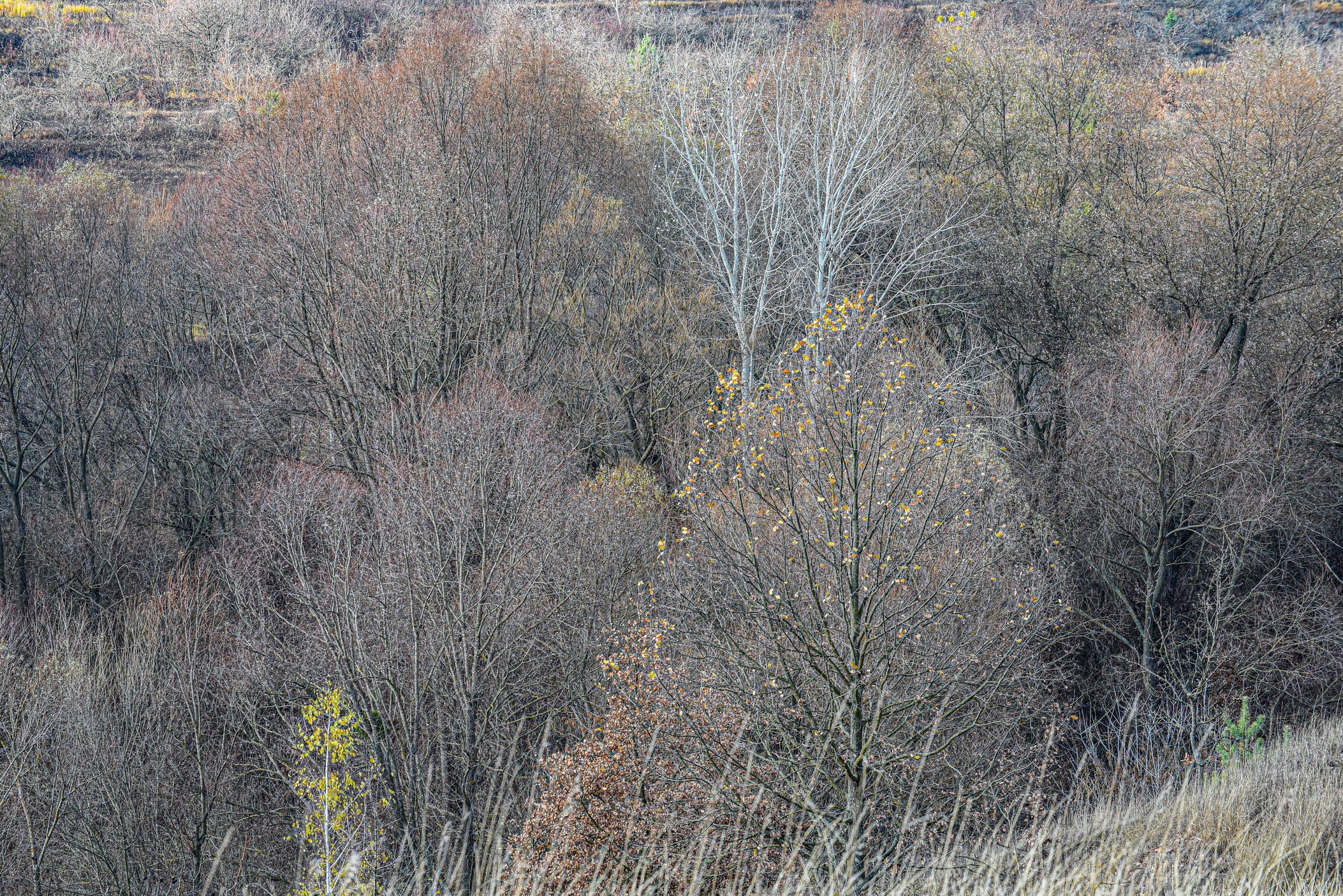 autumn landscape ukraine 0017