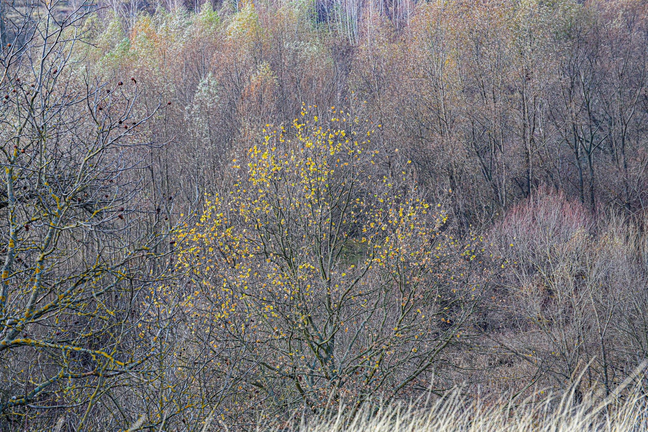 autumn landscape ukraine 0018