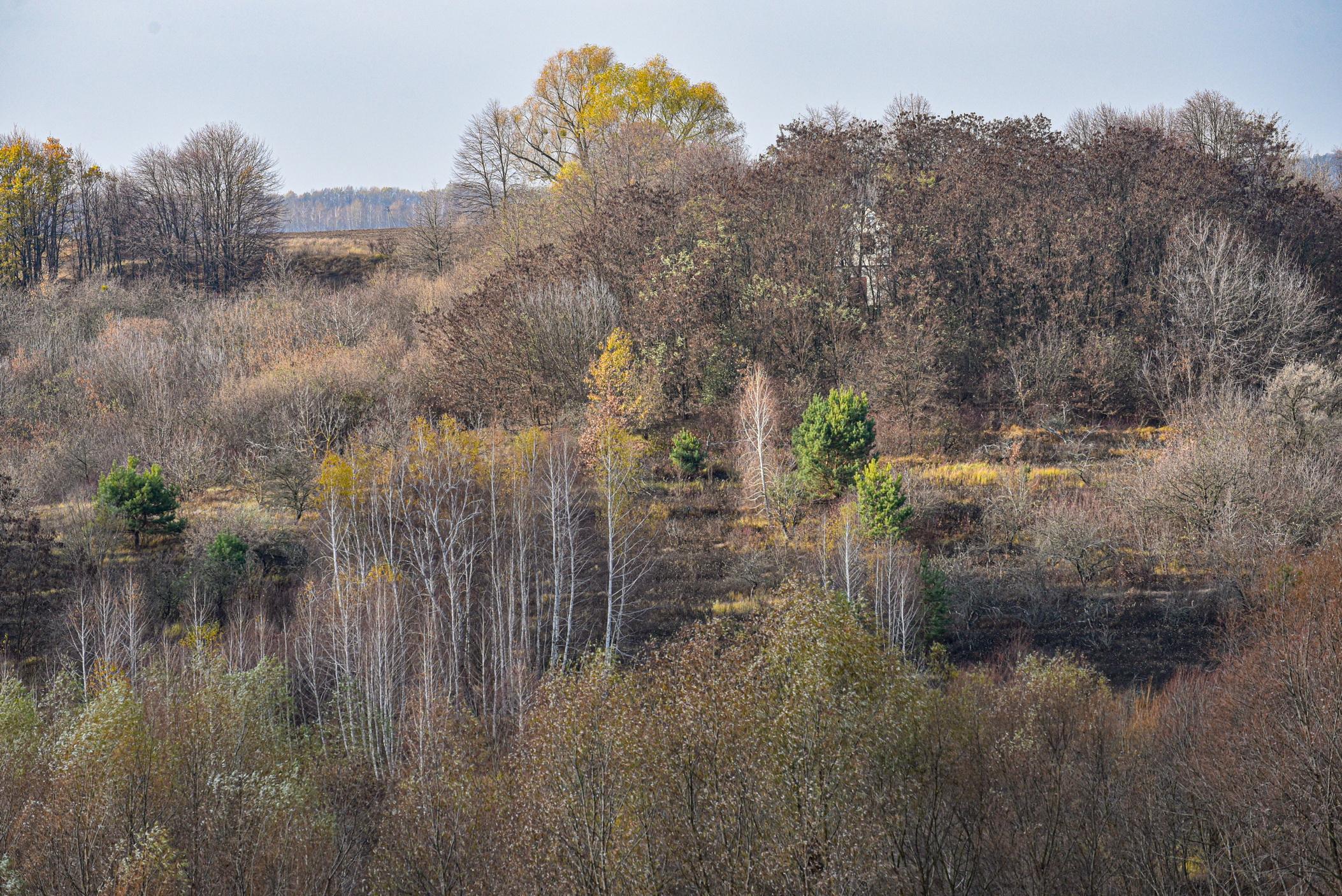 autumn landscape ukraine 0020