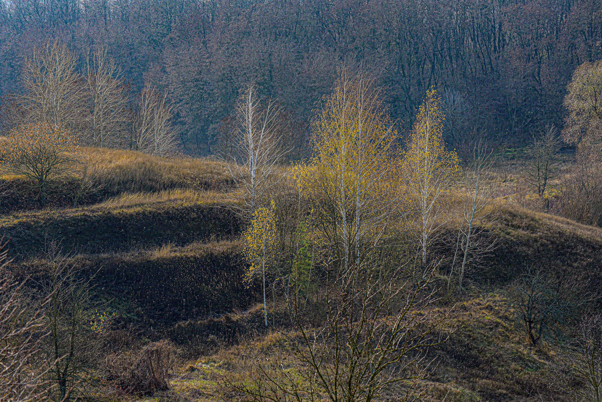 autumn landscape ukraine 0025