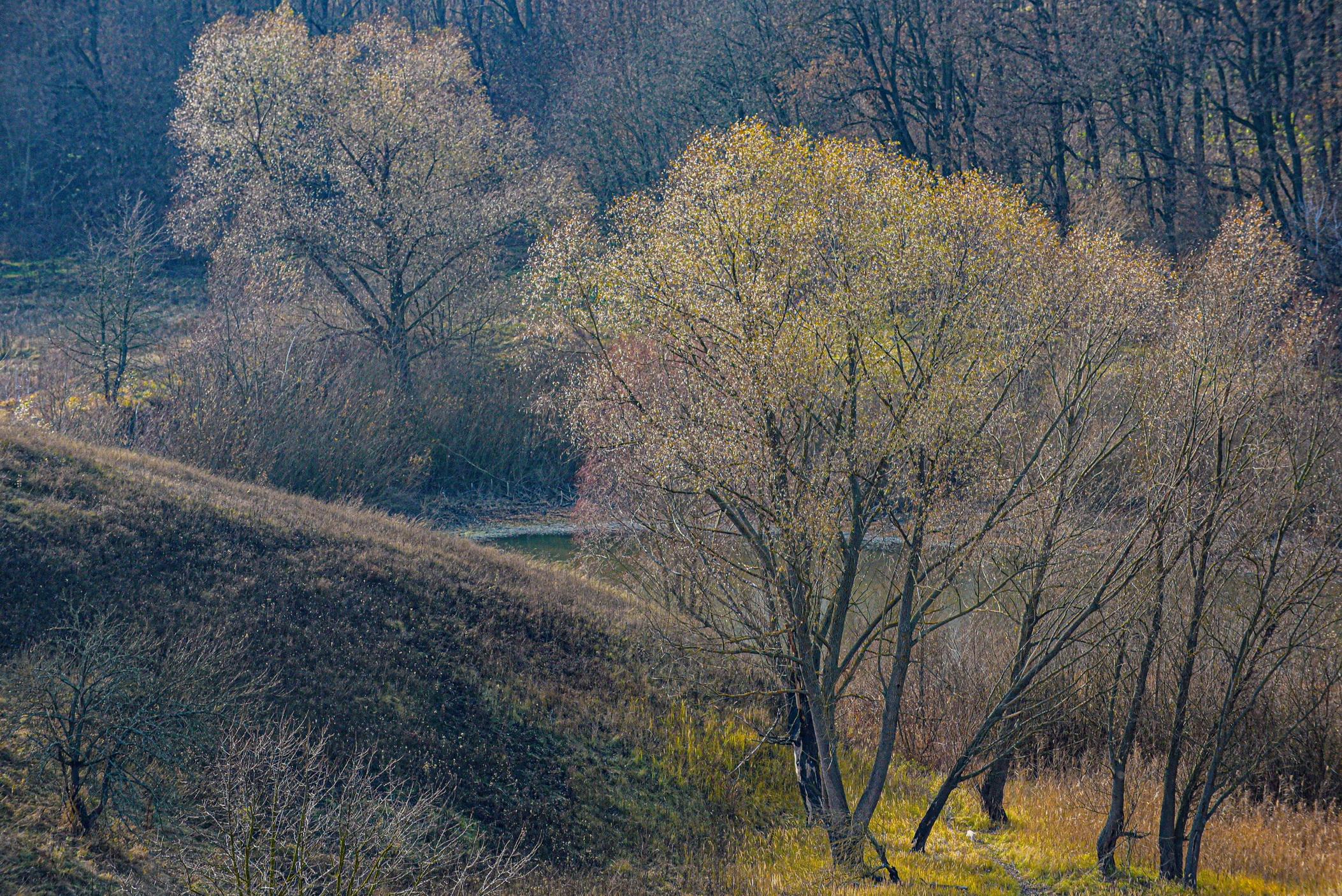 autumn landscape ukraine 0026