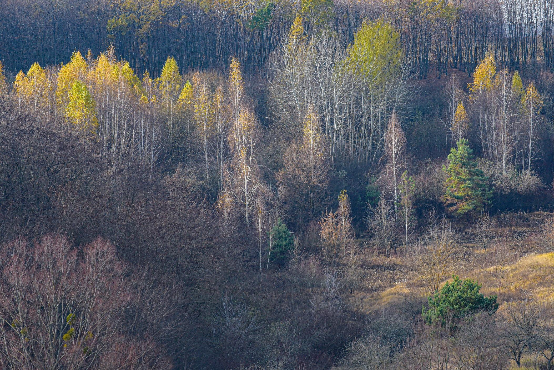 autumn landscape ukraine 0028